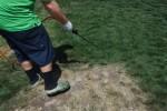 Warga California mewarnai rumput halaman yang kering (Metro.co.uk)
