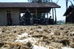 Bangkai ikan di dekat Waduk Gajah Mungkur (WGM) Wonogiri dikeluhkan warga karena berbau. (Muhammad Ismail/JIBI/Solopos)
