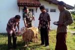Salah satu pemilik kambing memberikan ketupat yang telah didoakan oleh para sesepuh desa dalam ritual gumbregi yang digelar warga Dusun Sabrang, Desa Giripurwo, Girimulyo, Jumat (1/5/2015). (Holy Kartika N.S/JIBI/Harian Jogja)