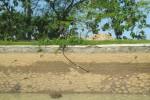 Dua anak berjalan di tanggul saluran irigasi primer Colo timur di Ngowan, Sugihan, Bendosari, Sukoharjo, yang terdapat lubang berselang, Kamis (7/5/2015). (Rudi Hartono/JIBI/Solopos)