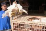 Pedagang ayam potong di Pasar Ayam Silir, Solo, Rabu (17/6/2015). (Sunaryo Haryo Bayu/JIBI/Solopos)