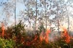 KEBAKARAN HUTAN : Ratusan Hotspot Masih Terdeteksi di Sumatra dan Kalimantan