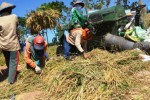 Ilustrasi panen padi. (JIBI/Solopos/Antara/Siswowidodo)