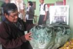 Seorang warga, Totok mengamati koleksi batu jenis giok, Kamis (4/6/2015). Batu seberat tiga kuintal itu sudah ditawar senilai Rp15 miliar. (JIBI/Solopos/Trianto Hery Suryono)