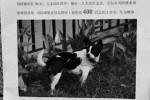iklan pencarian anjing milik Liu (Shanghaiis.com)