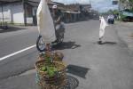 Tanaman diletakkan di tengah jalan jalur alternatif Magelang-Solo di Turi Sleman sebagai penanda kerusakan jalan. (JIBI/Harian jogja/Sunartono)