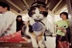 Tama, si kucing kepala stasiun (Liputan6.com)