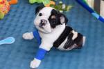 Anjing bernama Bonsai (Huffington Post)