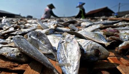 Penjemuran ikan di industri rumahan ikan asin Jongor, Tegal, Kamis (23/7/2015). (JIBI/Solopos/Antara/Oky Lukmansyah)