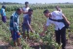 PENEMUAN GRANAT : Cangkul Diayunkan, Granat Nanas Ditemukan di Situbondo