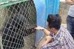 Wang Kayui bersama beruangnya (Dailymail)