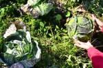 GUNUNG RAUNG MELETUS : Ribuan Hektare Lahan Pertanian Terselimuti Abu