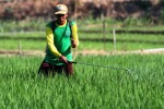 Petani menyemprotkan pestisida untuk membasmi hama padi di Ngawi, Sabtu (29/8/2015). (JIBI/Solopos/Antara/Ari Bowo Sucipto)