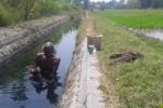 MASALAH LINGKUNGAN : Ikan Jadi Penanda Kondisi Air Pembuangan