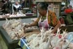 HARGA KEBUTUHAN POKOK : Harga Daging Ayam Ikuti Harga Daging Sapi