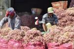 Aktivitas pedagang bawang merah di Pasar Bawang Kabupaten Probolinggo, Jawa Timur, Senin (24/8/2015). Harga bawang merah pada Panen Raya 2015 anjlok hingga ke level Rp3.000/kg-Rp6.500/kg dan mengakibatkan petani merugi karena tidak sebanding dengan biaya produksi yang tinggi. (Peni Widarti/JIBI/Bisnis)