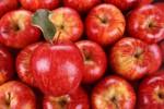 Apel merah (bertsredapple.com)