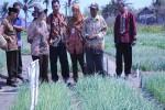 Wakil Ketua Komisi IV DPR RI Titik Soeharto saat meninjau lokasi lahan bawang merah di kawasan Ngepet, Desa Srigading, Kecamatan Sanden, Selasa (4/8/2015). (JIBI/Harian Jogja/Arief Junianto)