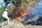 Sejumlah sukarelawan memadamkan api yang membakar hutan di Giriwoyo, Jumat (21/8/2015). Kebakaran tersebut menghanguskan sekitar 10 hektare hutan. (Istimewa)