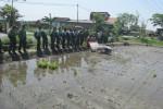 Anggota TNI mengikuti pelatihan pertanian di Sidowayah, Polanharjo, Klaten, Rabu (12/8/2015). Setiap anggota TNI dituntut untuk mengetahui ilmu di bidang pertanian, termasuk cara menggunakan alat tanam padi atau transplanter. (Ponco Suseno/JIBI/Solopos)