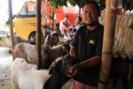 Pedagang menunjukkan kesehatan kambing yang dijual di Pasar Hewan Semanggi, Pasar Kliwon, Solo, Selasa (1/9/2015). Menjelang Idul Adha harga kambing sudah mulai naik hingga 10%. (Shoqib Angriawan/JIBI/Solopos)