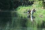 KERUSAKAN LINGKUNGAN BANTUL :  Talut di Sungai Winongo dan Sungai Gajah Wong Ambrol