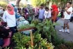Warga memilih tanaman sayuran organik pada acara peringatan Hari Pangan Dunia 2015 saat car free day (CFD) di Plaza Sriwedari, Solo, Minggu (18/10/2015). (Ivanovich Aldino/JIBI/Solopos)