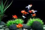 Ilustrasi akuarium (www.aquariumdesigngroup.com)