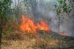 KISAH TRAGIS : Bakar Sampah Sambil Ngesot, Nenek 87 Tahun Tewas Terjebak Api