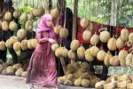 PERKEBUNAN SEMARANG : Duh, Cuaca Tak Bersahabat, Petani Durian Gunungpati Telat Panen