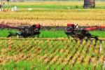 FOTO PERTANIAN MADIUN : Petani Madiun Persiapkan Tanam Padi