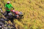 Ilustrasi petani membajak sawah. (JIBI/Solopos/Antara/Fikri Yusuf)
