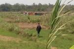 Sejumlah truk pengangkut pasir terparkir di lokasi penambangan pasir Sungai Progo yang berhimpitan dengan lahan pertanian warga, Kamis (26/11). Praktek penambangan pasir di Sungai Progo kini mulai menggerus lahan warga. (JIBI/Harian Jogja/Bhekti Suryani)