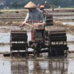 ASURANSI PERTANIAN : Petani Tulungagung Kurang Minati AUTP, Ini Sebabnya
