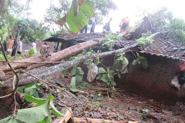 Kediaman Partini di Dusun Pelem RT 01 RW 03 Desa Pundungsari, Semin yang tertimpa pohon nangka dan jati yang tumbang akibat angin kencang, Selasa (1/12/2015). (JIBI/Harian Jogja/Uli Febriarni)