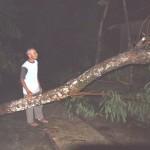 Warga Dusun Jatisari, Jatikuwung, Gondangrejo, Karanganyar, mengecek salah satu pohon yang tumbang dengan posisi melintang jalan di dekat rumahnya, Selasa (5/1/2016) malam. (Kurniawan/JIBI/Solopos)