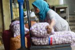 FOTO MASYARAKAT EKONOMI ASIA : Bawang Putih China Unggul di Magetan