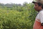 PERTANIAN JATIM : Produksi Cabai Jatim Tumbuh 30%, Harga Turun