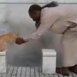 Jemaah umrah beri minum ke kucing (Youtube)