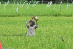 BANJIR SUKOHARJO : Pemkab Taksir Kerugian Sektor Pertanian Capai Rp5,1 Miliar