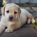 KISAH TRAGIS : Lapar, Anak Anjing Bakar Rumah Majikan