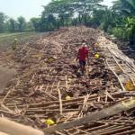 BENCANA SRAGEN : Kandang Ambruk, 9.000 Ekor Ayam di Karangmalang Mati
