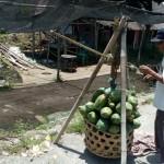 PERTANIAN BOYOLALI : Pepaya Naik Rp2.000/kg
