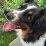 Foto Toby, anjing dengan dua hidung (Caters)
