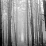 PENEMUAN MAYAT WONOGIRI : Hiii! Terkubur di Hutan, Mayat Perempuan Ini Terlihat Tangan Kanannya