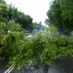 Mendadak Puting Beliung Tumbangkan Pohon-Pohon di Boyolali