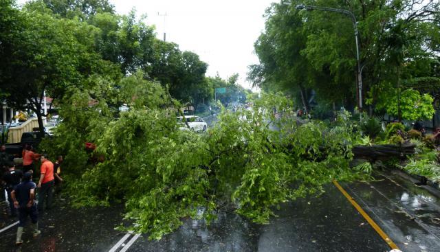 Petugas BPBD kota Solo berusaha menyingkirkan pohon asem yang tumbang menutup Jl Slamet Riyadi, Gendengan (depan RS Slamet Riyadi), Selasa (29/3/2016). Pohon asem tua tersebut ambruk akibat lapuk dan tak kuat menahan terpaan angin kencang saat hujan. (Sunaryo HB/JIBI/Solopos)