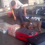 BANDARA AHMAD YANI : Bandara A. Yani Perketat Pemeriksaan, 2 Anjing Pelacak Dikerahkan