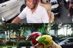 Seekor anjing mengenakan helm dan kacamata saat membonceng di sepeda motor. (Facebook-Satlantas Ngawi)