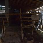 Seorang warga membersihkan kandang kambing milik Naib, warga Dusun Ngambaklipuro, Desa Bekonang, Kecamatan Mojolaban, Sabtu (26/3/2016). Belasan ekor kambing milik warga setempat mati mendadak sejak dua pekan lalu. (Bony EW/JIBI/Solopos)